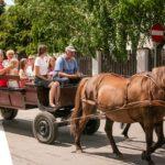 Piknik Parafialny - 17.06.2018_26