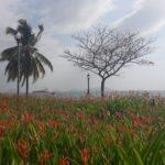PANAMA 2019_84